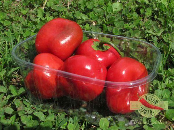 Large Red Rocoto - Sjemenke chili papričica 3