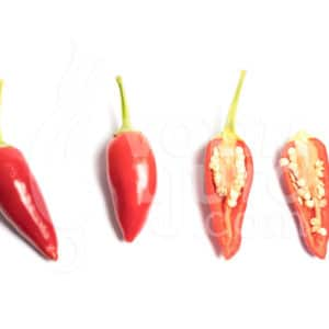 Zalijevanje chili papričica - manje je više ili više je manje? 13