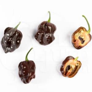 Sjemenke chili papričica - preko 50 sorti! 70