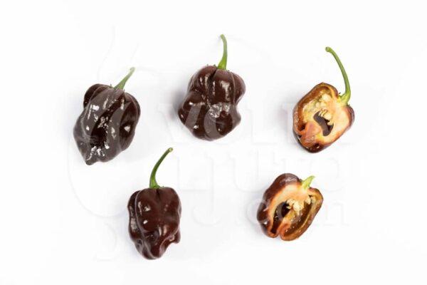 Habanero Chocolate - Sjemenke chili papričica 3