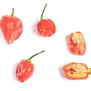 Sjemenke chili papričica - preko 50 sorti! 66