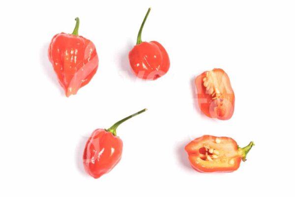 Habanero Red - Sjemenke chili papričica 3