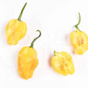 Sjemenke chili papričica - preko 50 sorti! 81