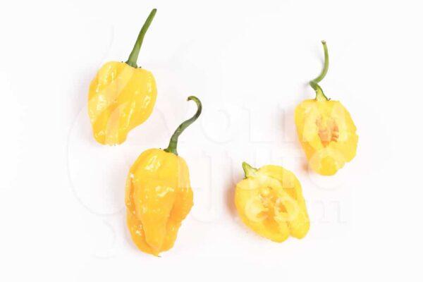 Habanero Yellow - Sjemenke chili papričica 3