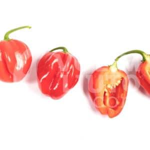 Zalijevanje chili papričica - manje je više ili više je manje? 5