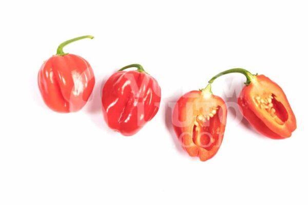 Red Savina Habanero - Sjemenke chili papričica 3
