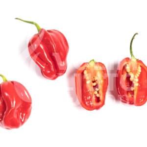 Sjemenke chili papričica - preko 50 sorti! 68