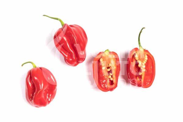 Scotch Bonnet Trinidad Red - Sjemenke chili papričica 3