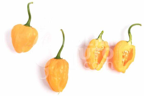 Scotch Bonnet Yellow - Sjemenke chili papričica 3