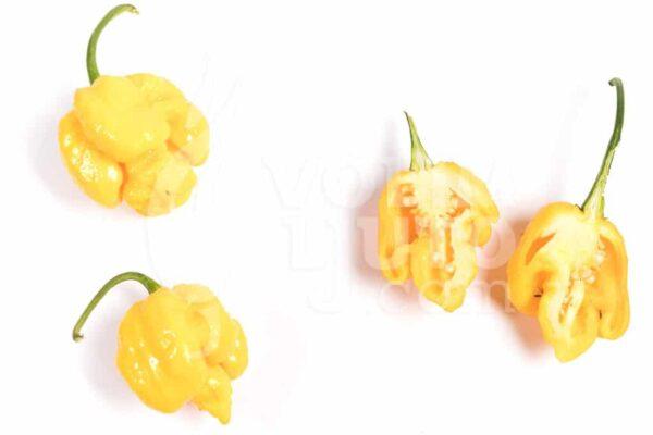 Trinidad Scorpion Yellow - Sjemenke chili papričica 3