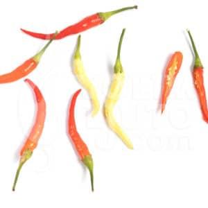 Papričice kao ukrasne biljke 3