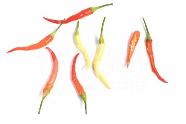 Medusa - Sjemenke chili papričica 3