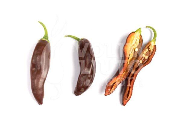 Ecuadorian Brown - Sjemenke chili papričica 3