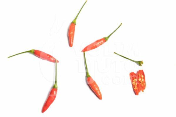 Tabasco - Sjemenke chili papričica 3