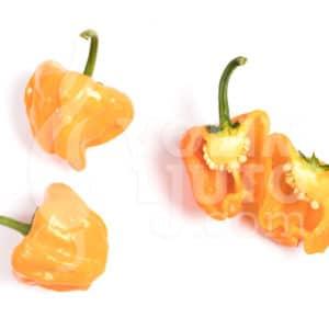 Jamaican Hot Yellow 1