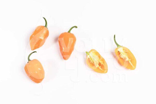 Habanero Orange - Sjemenke chili papričica 3