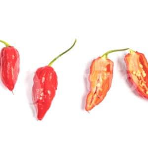 Svježe chili papričice - samo unutar sezone 12