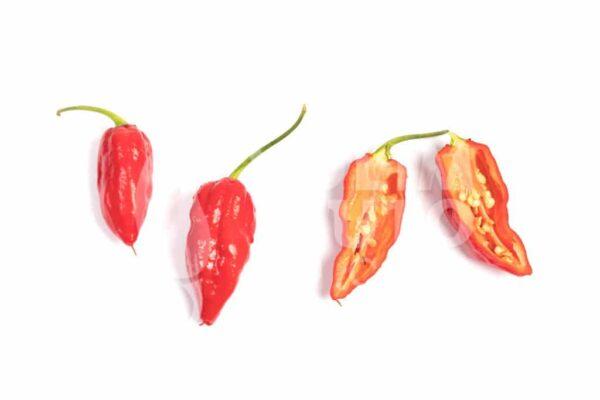 Naga Morich - Sjemenke chili papričica 3