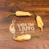 Poblano - Sjemenke chili papričica 1