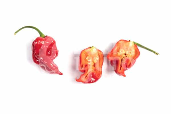 Naga Viper - Sjemenke chili papričica 3