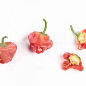 Sjemenke chili papričica - preko 50 sorti! 50