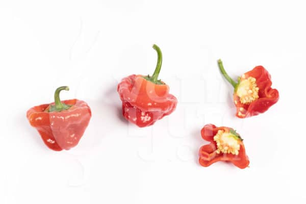 Jamaican Hot Red - Sjemenke chili papričica 3