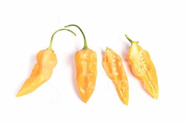 Bhut Jolokia Yellow - Sjemenke chili papričica 3