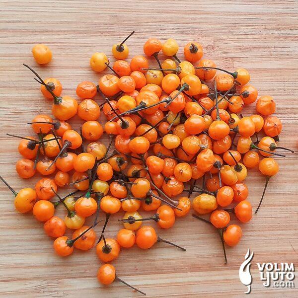 Aji Charapita sadnica chili papričice 2