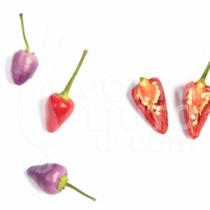 Sadnice chili papričica / presadnice chili paprike 22