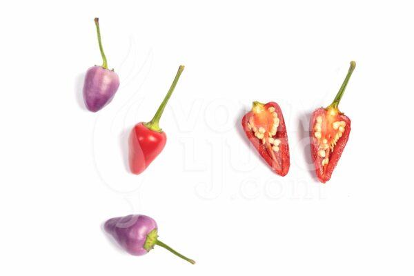 Aurora sadnica chili papričice 3