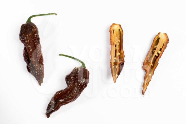 Bhut Jolokia Chocolate sadnica chili papričice 3