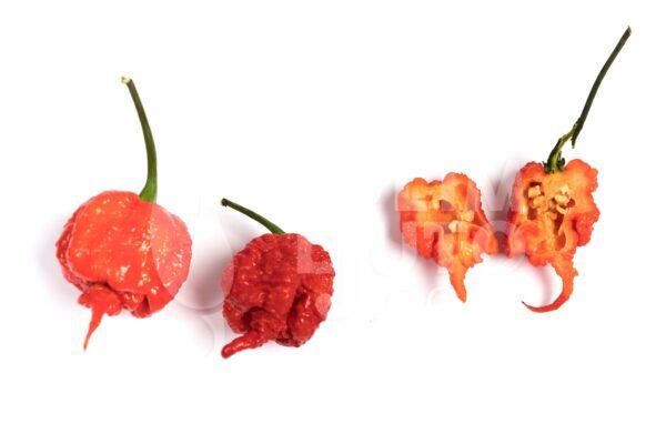 Carolina Reaper sadnica chili papričice 3