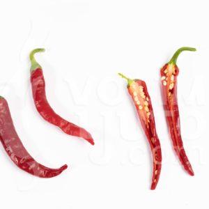 Sadnice chili papričica / presadnice chili paprike 20