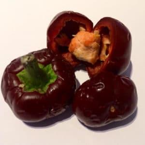 Sadnice chili papričica / presadnice chili paprike 16