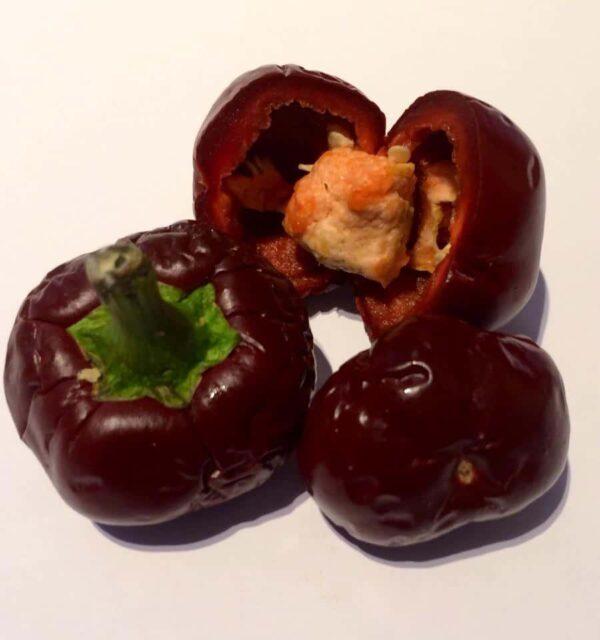 Chocolate Cherry Bomb sadnica chili papričice 3