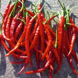 10 razloga zašto uzgajati chili papričice u plasteniku 12