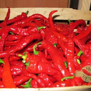 Sadnice chili papričica / presadnice chili paprike 9