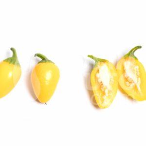 Sadnice chili papričica / presadnice chili paprike 8