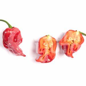 Sadnice chili papričica / presadnice chili paprike 36