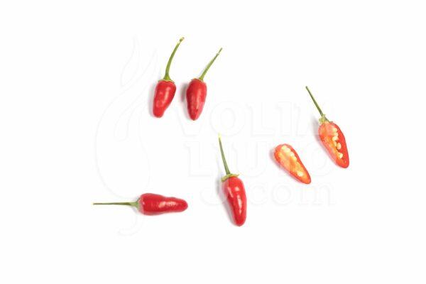 Thai Hot sadnica chili papričice 3