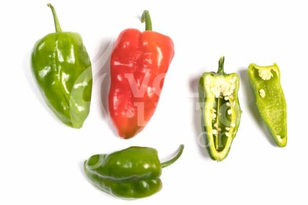 Pimiento de Padron sadnica chili papričice 3